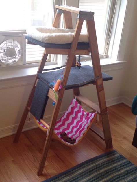 DIY cat tree made from an old wooden ladder, outdoor carpeting, left over wood and jute wrapped around the bottom for a scratching post. Hammock is just material and a towel. Super fun, cheap and easy to make!