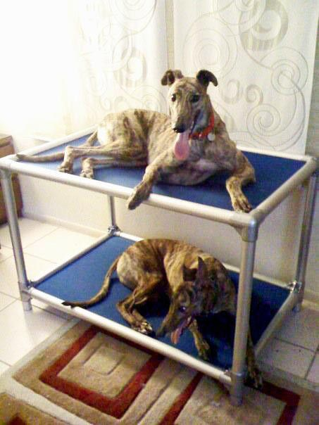 Dog Bunk Bed Almond Dog Bunk Beds Kuranda Dog Beds Bunk Beds