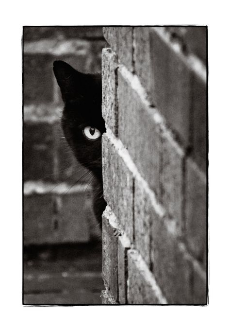 Ready for more Blackie stories?  This pic is very similar to the way Blackie would spy on me from time to time.  That is until I saw him and spoke his name.  Then he would stroll out from behind wherever he was and act as if he wasn't trying to hide or anything of the kind!  I have to admit he surprised me a couple times when he would jump out from the middle of a quilt thrown carelessly on the floor — all Smiles and meows at terrorizing his mom and making her crazy!