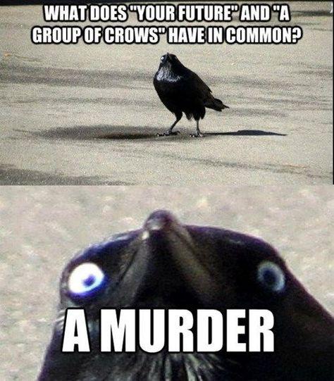 Hide Yo Scraps, Hide Yo Shiny Baubles: Creepy Crow is Coming to Getcha! -  DundunDUN!  - #9gagFunny #baubles #coming #creepy #crow #FunnyMemes #FunnyStuff #getcha #Hide #MemesHumor #scraps #shiny