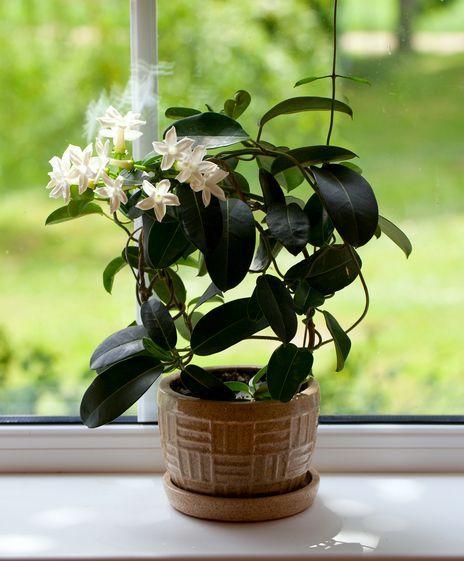 Diese 6 Zimmerpflanzen Sind Gut Fur Unsere Gesundheit Schlafzimmer Pflanzen Coole Zimmerpflanzen Und Pflanzen Zimmer