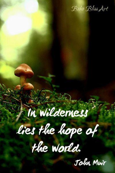 Best Nature Quotes John Muir Wilderness Ideas Save Nature Quotes Mother Nature Quotes Hope Of The World