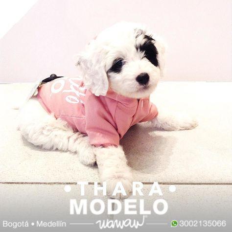 697154e416b8 Wawaw tienda de ropa accesorios juguetes snacks medallas y placas para  mascotas perros y gatos en Bogotá Medellín y todo Colombia. www.wawaw.co