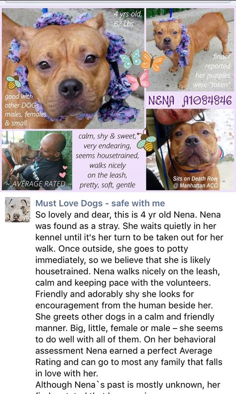 SAFE❤️❤️ 9/1/16 Manhattan center NENA – A1084846 EMALE, TAN, AM PIT BULL TER MIX, 4 yrs STRAY – STRAY WAIT, NO HOLD Reason STRAY Intake condition EXAM REQ Intake Date 08/09/2016, From NY 10455, DueOut Date08/12/2016, http://nycdogs.urgentpodr.org/nena-a1084846/
