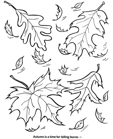 Autumn Season Coloring Page Boyama Sayfalari Sonbahar