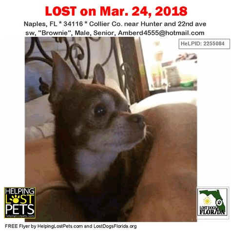 Have You Seen This Lost Dog Lostdog Brownie Naples Hunter 22nd Ave Sw Fl 34116 Collier Co Dog 03 24 2018 Male Losing A Dog Losing A Pet Dogs