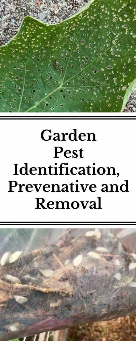Learn about 5 common backyard garden pests and how to