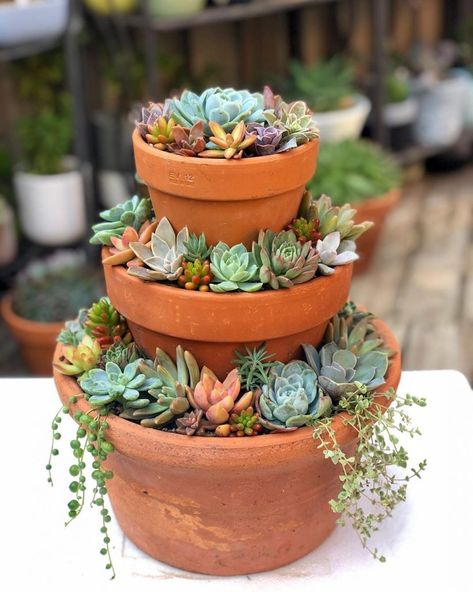 Succulents vs Cacti— What's the Difference? – Container Gardening Succulents vs Cacti— What's the Difference?- Succulents vs Cacti— What's the Difference? Crassula Succulent, Succulent Gardening, Garden Terrarium, Container Gardening, Succulent Planters, Cacti Garden, Terrarium Centerpiece, Succulent Garden Ideas, Terrarium Ideas