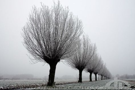 50 Most Beautiful Trees from Around the World - Real Photos