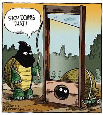 Pin By Wayne Branam On Humor In 2020 Turtles Funny Cartoon Jokes Funny Cartoons