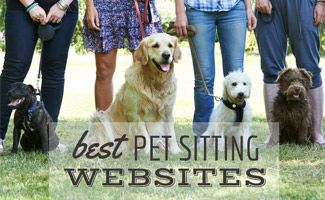 Best Pet Sitting Websites 2020 Dogvacay Vs Rover Vs Care Vs Fetch Etc With Images Dog Daycare Dogs