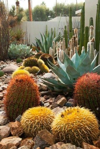 Melissehome On Instagram Home Garden Lifestyle Products For A Life Well Lived Interiordesign P Succulent Landscaping Plants Succulent Landscape Design
