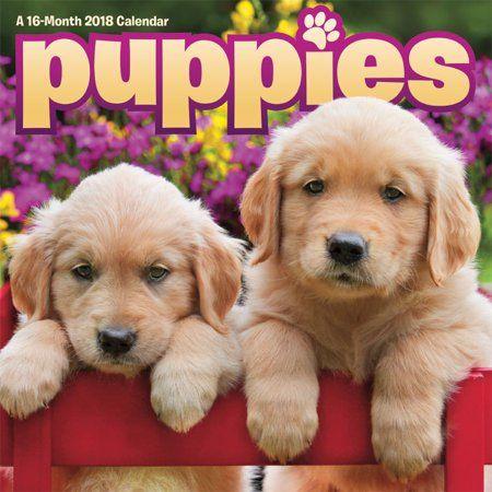Office Supplies Puppies Choosing A Dog Retriever Puppy