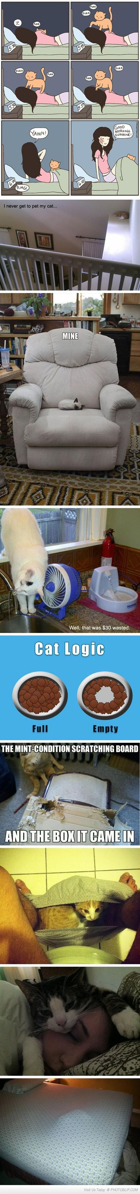 Cats...omg!! So true... This is so our cat!