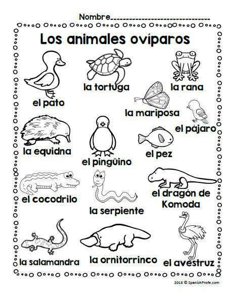 Los Animales Oviparos Oviparous Animals In Spanish Spanish Profe Vocabulary Word Walls Vocabulary Words Oviparous Animals