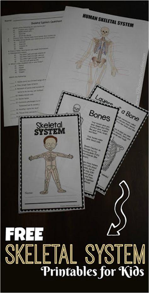 Free Skeletal System Worksheets Kids Educate Science Pinterest