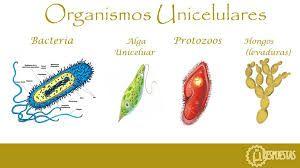 Pin En La Celula