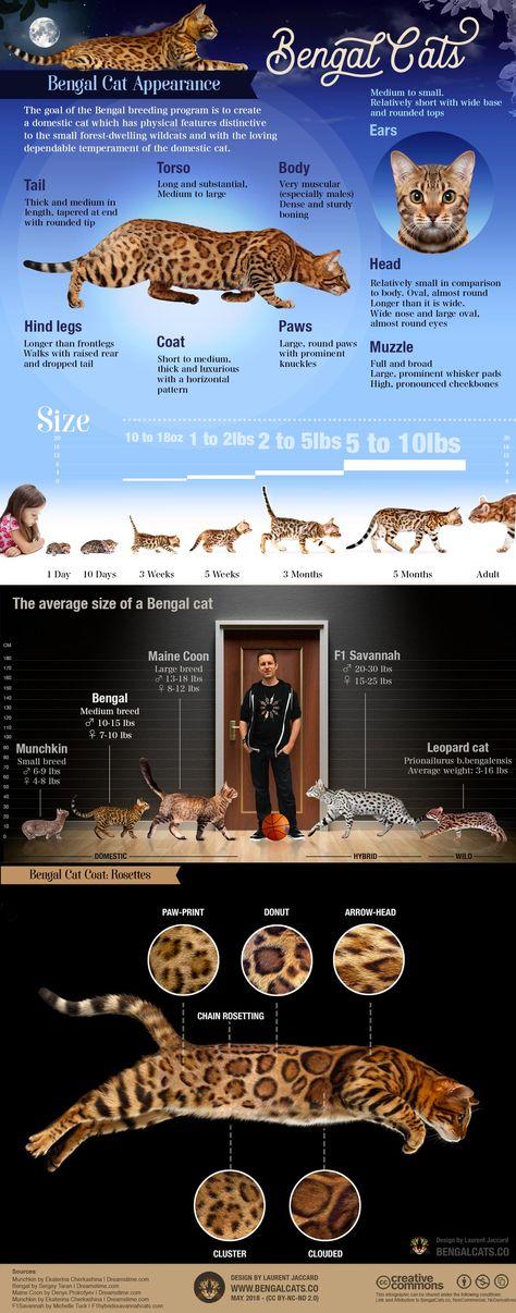 Cats Breeds Chart 50 Ideas