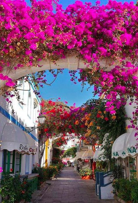 It's a beautiful world Bougainvillea in Puerto de Mogán, Gran Canaria / Spain Places Around The World, The Places Youll Go, Places To See, Around The Worlds, Tenerife, Wonderful Places, Beautiful Places, Canary Islands, Spain Travel