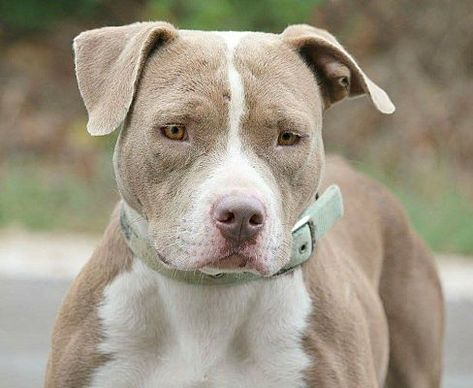 Pin On Pets Needing Home In Mississippi