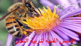 الاسس الفنية لتربية النحل Bee Keeping Animals Bee