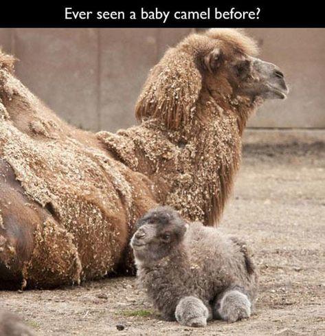 It's like a fluffy potato!