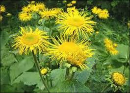 Flowers Names Useful List Of Flowers With Images 7 E S L Flower Names List Of Flowers Flowers Names And Pictures