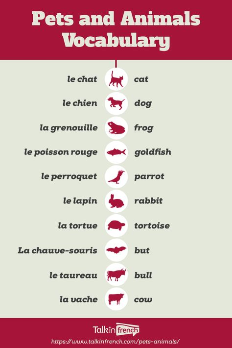 Pets and Animals Vocabulary