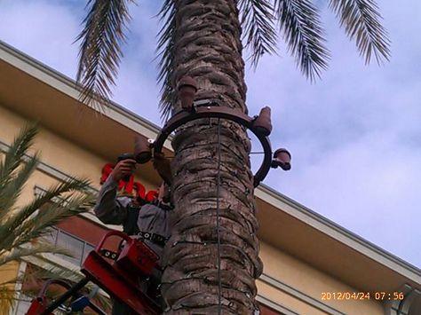 LED Palm Tree Light Ring 12 Volt 5.5 watts 2700k per Spotlight