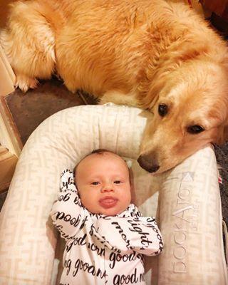 My Top 10 Tips For Raising A Golden Retriever Puppy Retriever