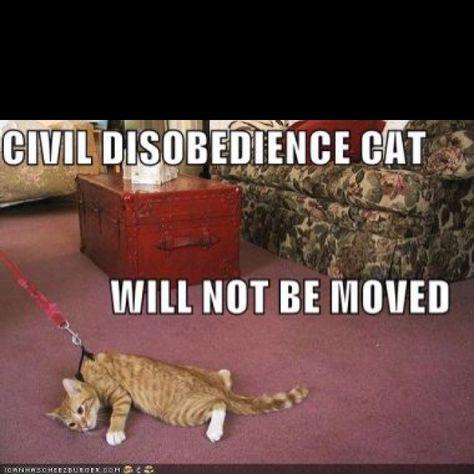 Ha! Stick it to the man, kitteh.