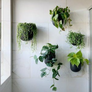 Ceramic Indoor Outdoor Wallscape Planters Hanging Plants Indoor Plant Decor Indoor Bathroom Plants