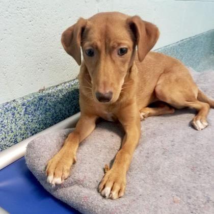Adopt Niki On Petfinder Humane Society Dog Adoption Mixed Breed