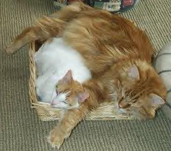 cat-size