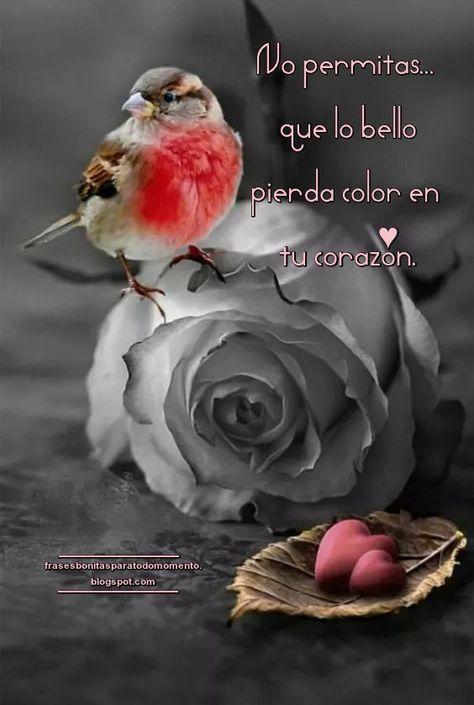 No permitas que lo bello pierda color en tu corazón.