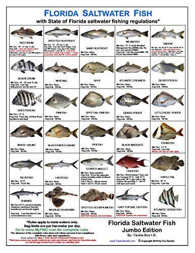Tackle Box I D Florida Saltwater Fish Identification Car Https Www Amazon Com Dp B078ldf6qr Ref Cm Sw R Pi Dp U Florida Fish Saltwater Saltwater Fishing