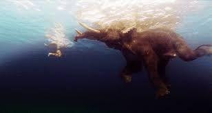 Bildergebnis Fur Elefanten Gif Tumblr Elefanten Gif Bilder