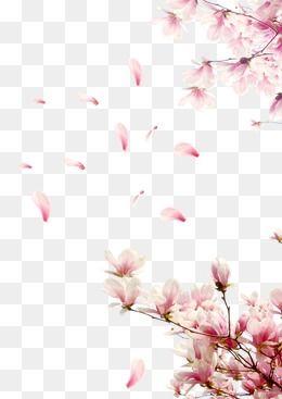 العصفر الديكور Photoshop Flowers Free Watercolor Flowers Flower Png Images