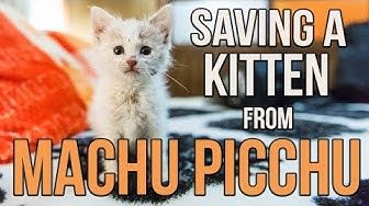 1 10 Tips For Tricky Bottle Baby Kittens Youtube Beautiful Cats Pictures Kitten Baby Kittens