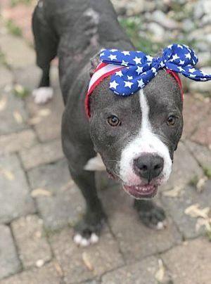 Ahhh Pitbull Lab Mix Puppies Nice Pitbull Terrier Pitbulls
