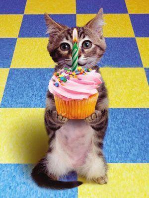 صور عيد ميلاد سعيد فيس بالانجليزي والعربي 2019 بطاقات عيد ميلعياد سد متحركه 2019 بالانجليزي بطاقات سد Happy Birthday Cat Cat Birthday Cat Birthday Funny