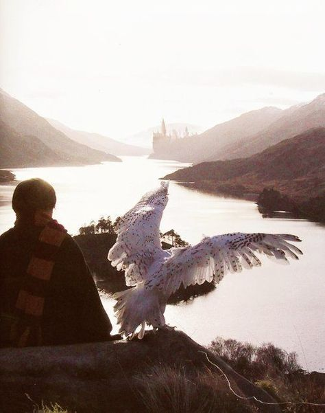 The 65+ Best Free Harry Potter Wallpaper Downloads For iPhone  