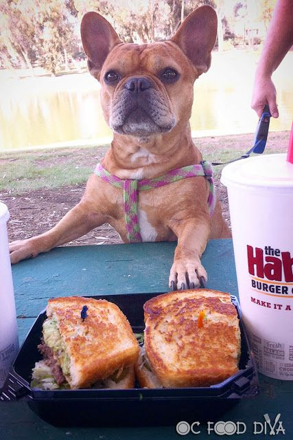 Celebrate National Sourdough Bread Day With The Habit S Santa Barbara Char Even Meili Is Ready To Celebrate Http Oc Sourdough Burger Sourdough Bread