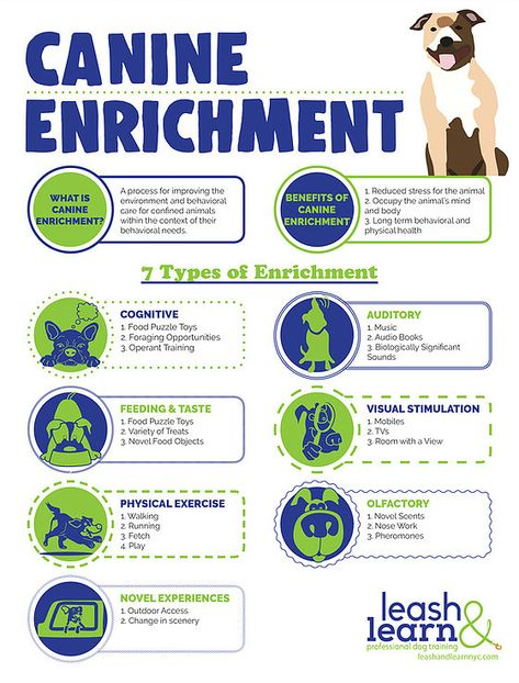 Leash And Learn Professional Dog Training Nyc Dog Training