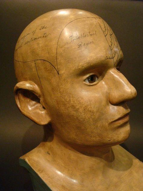 Creepy Cast Resin Phrenology Head Victorian Steampunk