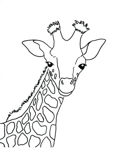 Giraffe Coloring Pages Free Printable Coloring Coloringpages