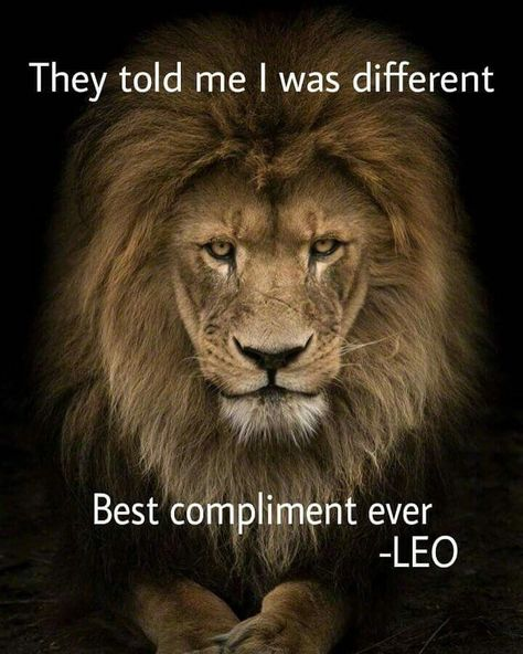Lion is the king of the jungle and a Leo man is the king of the zodiac. Just find out how to attract him and become his queen. Leo Zodiac Facts, Zodiac Quotes, Pisces Zodiac, Citation Lion, Ascendant Lion, Leo Traits, Great Inspirational Quotes, Great Quotes, Leo Horoscope