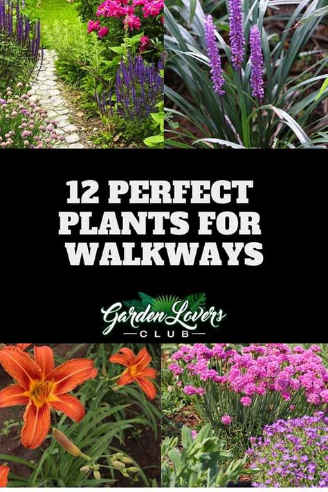 12 Perfect Plants for Walkways