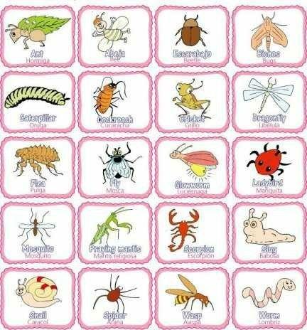 Los Insectos En Inglés Y Español Homeschooling Insectos En