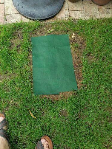 Biodegradable Grass Seed Mat Biolausa In 2020 Grass Seed Mat Grass Seed Biodegradable Products